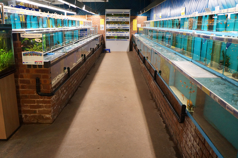 We have over 200 aquariums in-store!