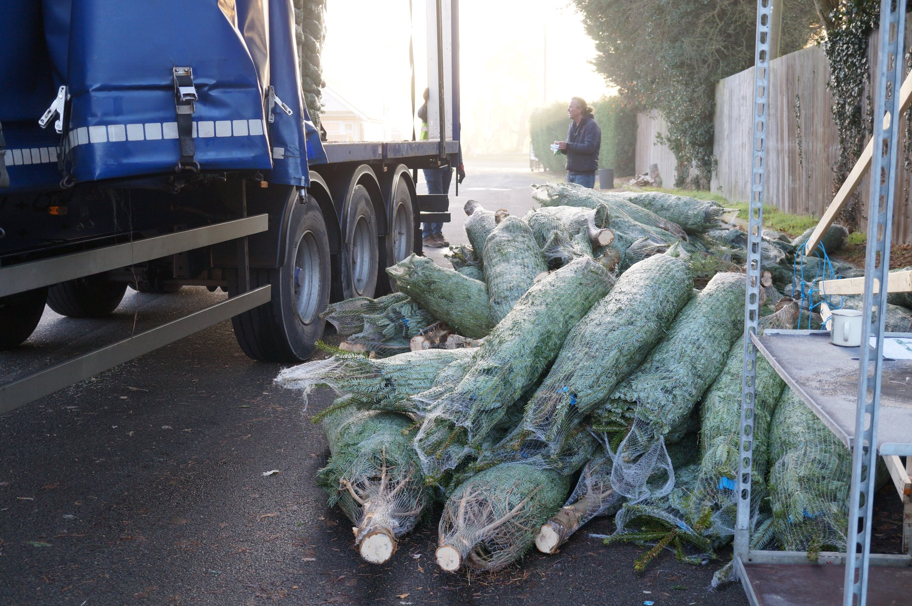 Christmas tree delivery at Fleur Square