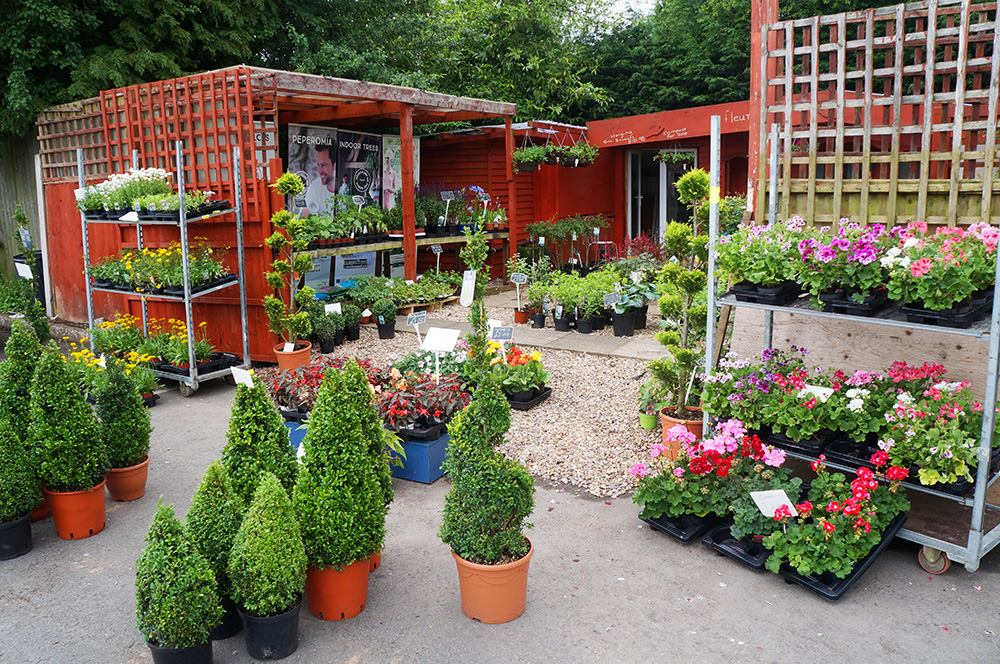 Garden plants and flowers for sale from Fleur Square